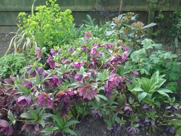 , Planting Summer flowering bulbs