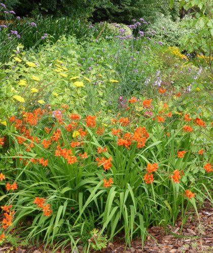 garden designer warwickshire and staffordshire