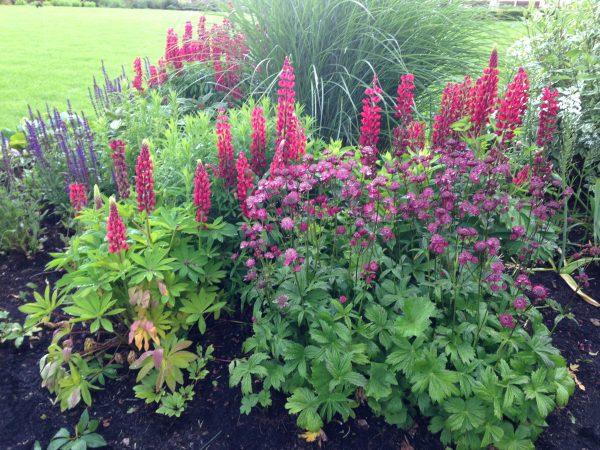 Garden & Planting Consultations