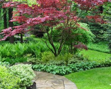 , Creating Focal points in the garden