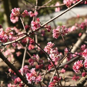 , No colour in your garden in winter – think again