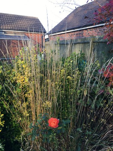 Calamagrostis Karl Foerster . Autumn grasses showing off.
